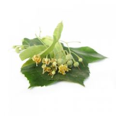Lime Blossoms (Tilia cordata MILL.) BIO