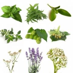 BIO Herb Pack II (10 Herbs)