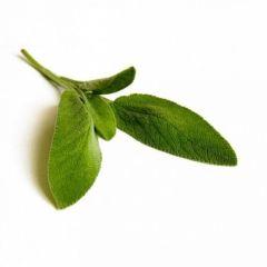 Sage (Salvia officinalis L.) BIO