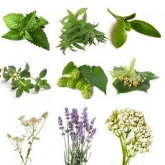 BIO Herb Pack III (5 Herbs)